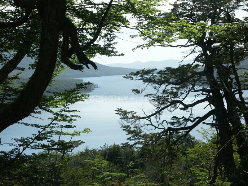Escondidotrog van Lago de boom royalty-vrije stock foto's