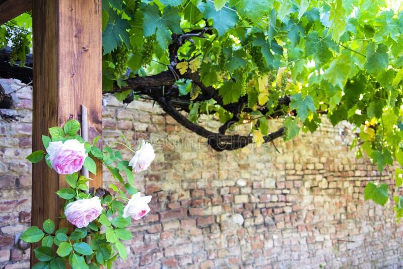 Escondrijo pintoresco hermoso de Toscana rural, con las plantas y las flores imagen de archivo