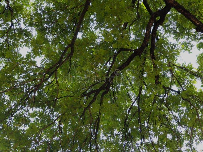 Escova da árvore imagem de stock