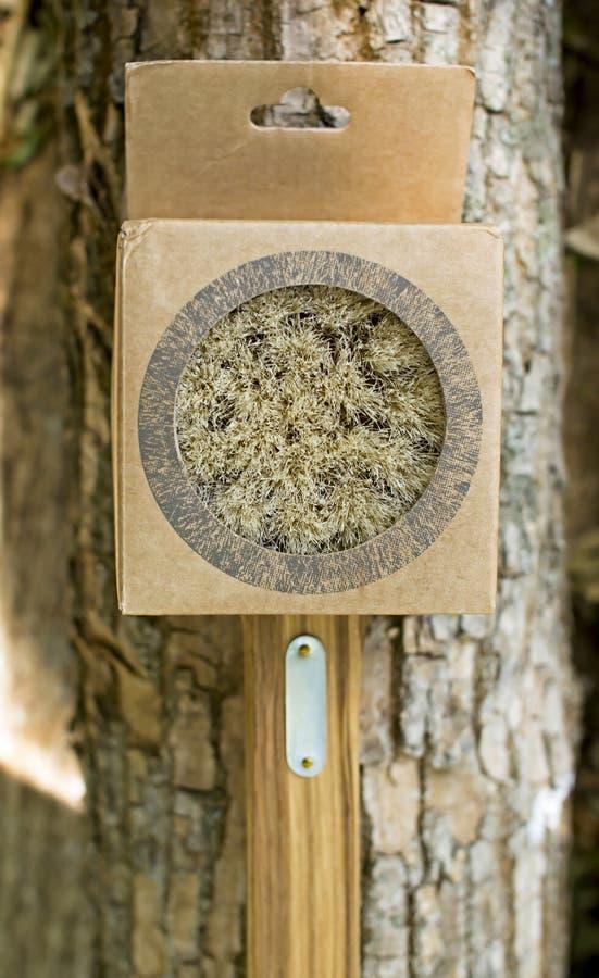 Escova de madeira com um punho imagens de stock royalty free
