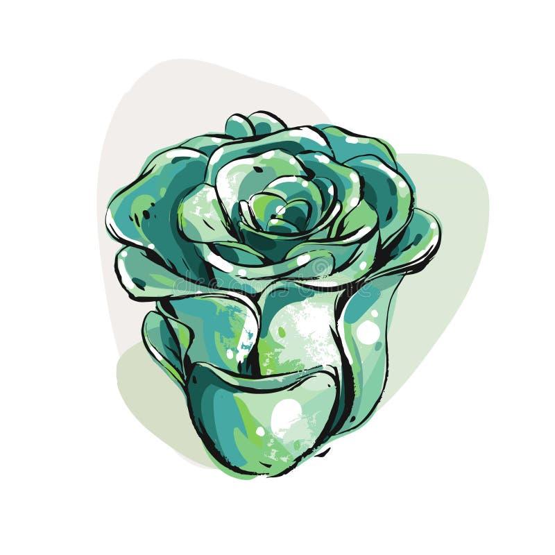 A escova gráfica tirada mão da tinta do sumário do vetor textured flores suculentos da flor do desenho de esboço em cores verdes  ilustração royalty free