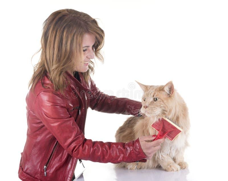 Escovadela do gato de racum de Maine imagem de stock royalty free