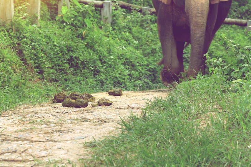 Escremento dell'elefante su terra nel campo dell'elefante fotografie stock libere da diritti