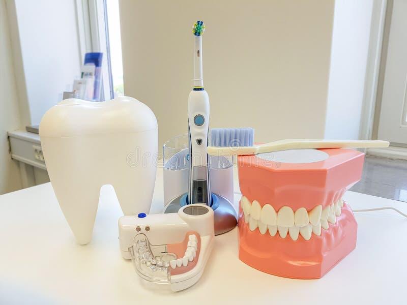 Escritório do dentista Ferramenta ortodôntica do modelo e do dentista fotografia de stock royalty free