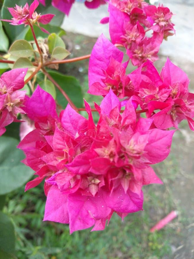 Escrita colorida da flor da árvore no prrity assim fotos de stock royalty free