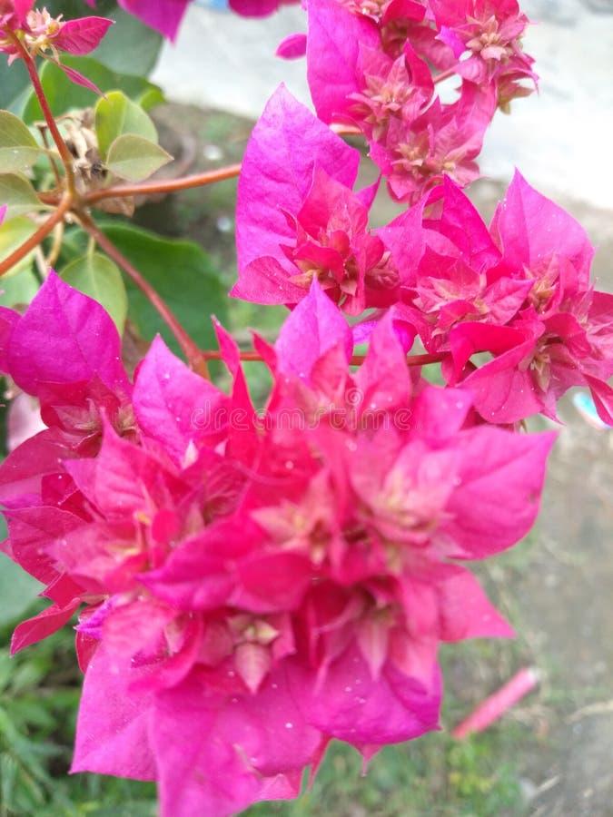 Escrita colorida da flor da árvore no prrity assim imagens de stock