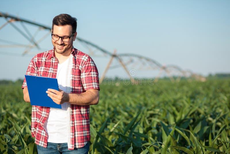 Escrita nova feliz do fazendeiro ou do agrônomo em uma prancheta, inspecionando campos de milho imagens de stock