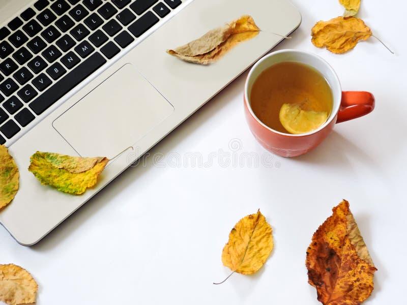 Escritorio de Ministerio del Interior con el ordenador port?til, taza del t?, hojas de oto?o en un fondo blanco Espacio de trabaj fotografía de archivo libre de regalías