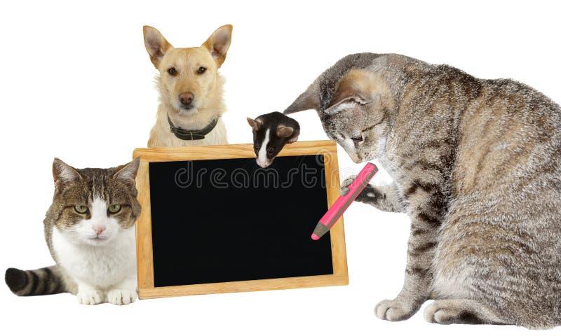 Escritura del gato en una pizarra en blanco imagen de archivo