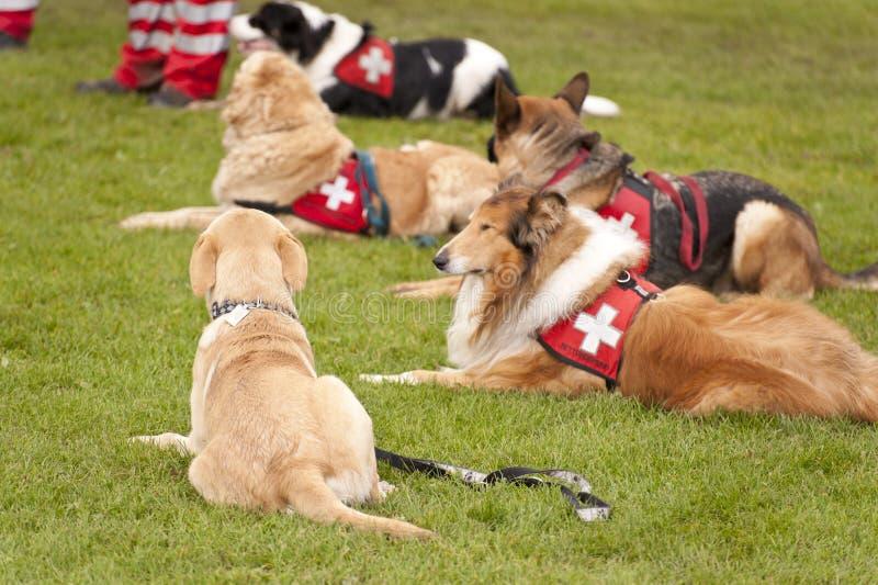 Escuadrilla del perro del rescate foto de archivo
