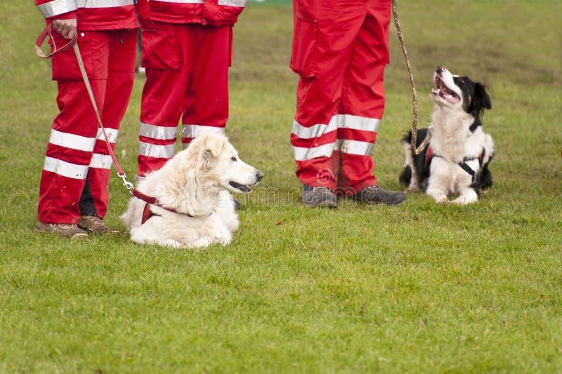 Escuadrilla del perro del rescate fotografía de archivo