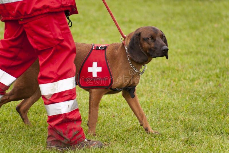 Escuadrilla del perro del rescate fotos de archivo