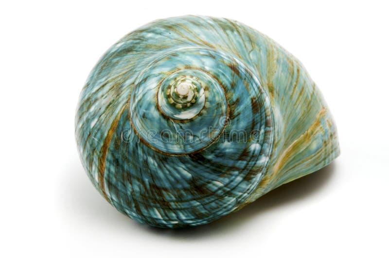 Escudo azul do mar foto de stock