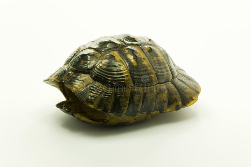 Escudo de uma tartaruga inoperante imagem de stock royalty free