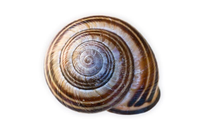 Download Escudo do caracol foto de stock. Imagem de espiral, animal - 16850082