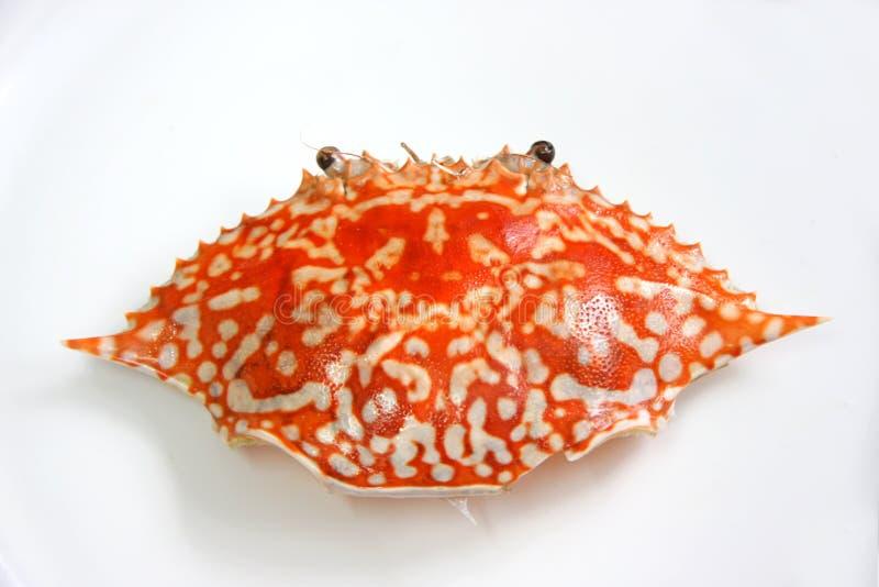 Escudo do caranguejo de rei foto de stock royalty free