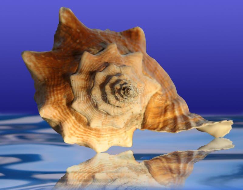 Escudo do mar fotografia de stock