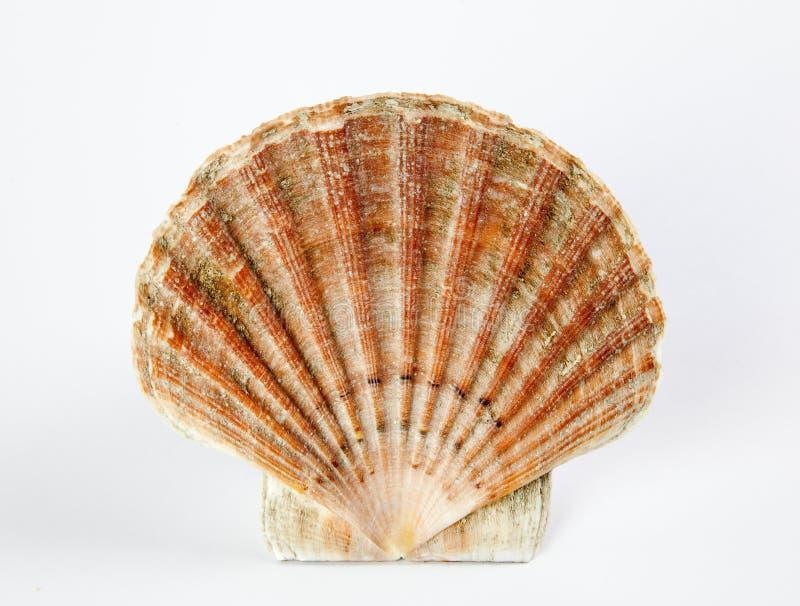 Escudo do mar