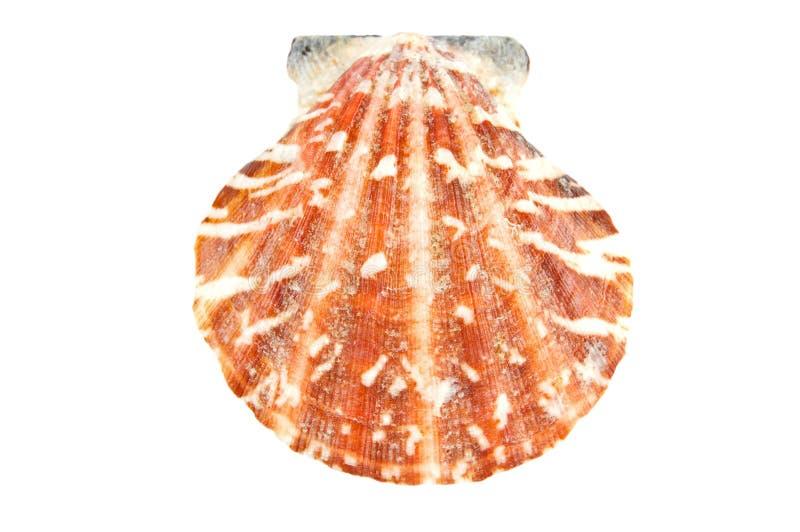 Escudo do mar foto de stock royalty free