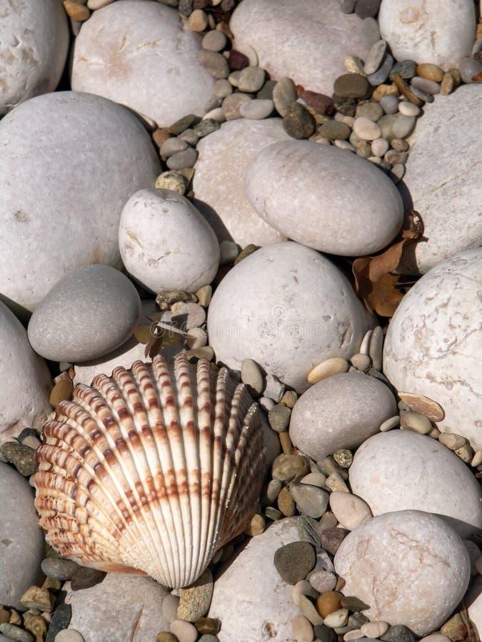 Download Escudo do mar imagem de stock. Imagem de vertical, oceano - 64127