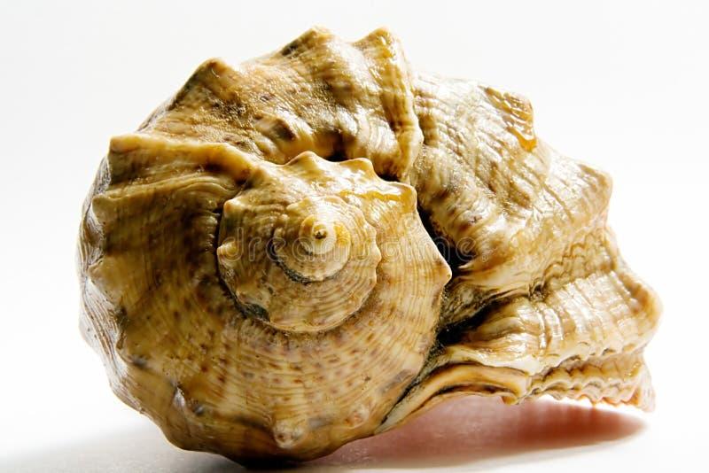 Escudo do mar foto de stock