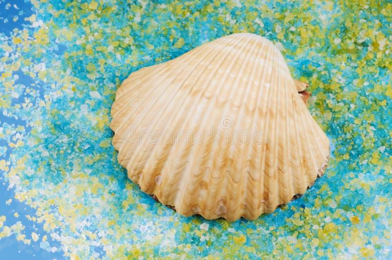 Escudo do mar em grões de sal. fotos de stock royalty free