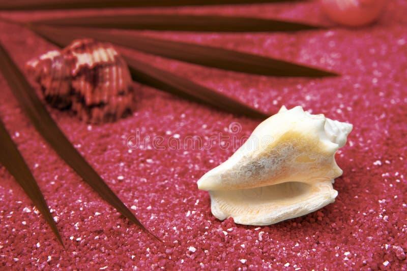 Escudo do mar, licença da palma no fundo cor-de-rosa fotografia de stock royalty free