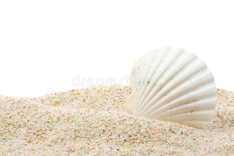 Escudo do mar na praia imagens de stock