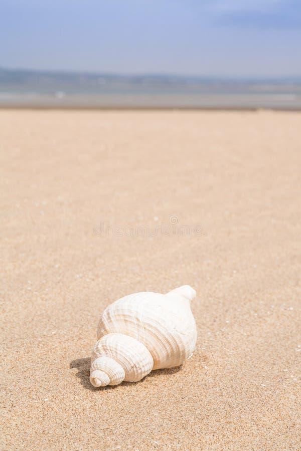 Escudo do mar na praia fotografia de stock royalty free