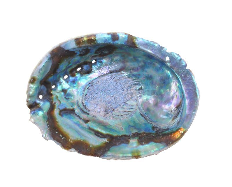 Escudo do molusco da califórnia fotos de stock