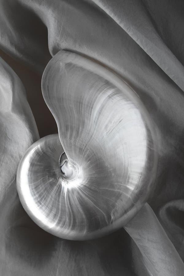 Escudo do nautilus fotografia de stock