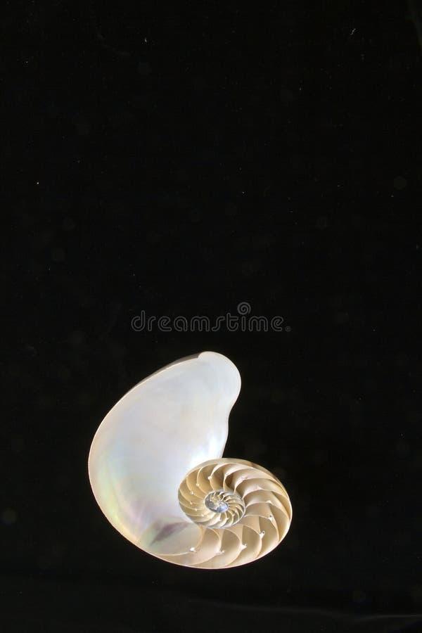 Escudo do nautilus fotografia de stock royalty free