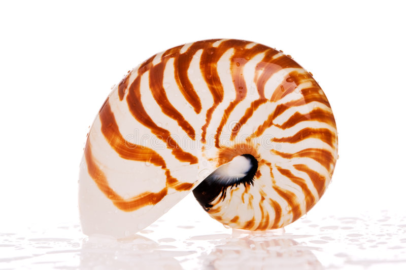 Escudo do nautilus fotografia de stock