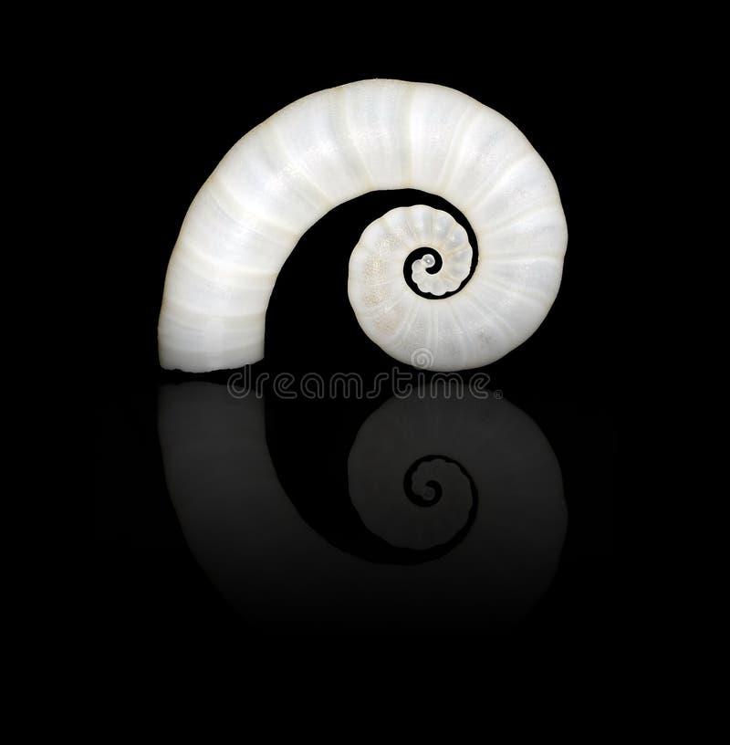 Escudo espiral imagens de stock