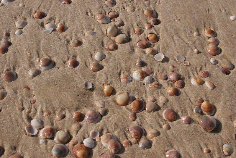 Escudo na praia imagem de stock royalty free