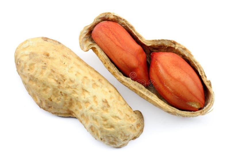 Escudo Roasted do amendoim fotografia de stock royalty free