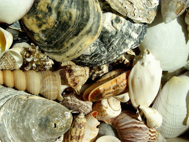 Download Escudos foto de stock. Imagem de fundo, macro, animal, oceanos - 59136