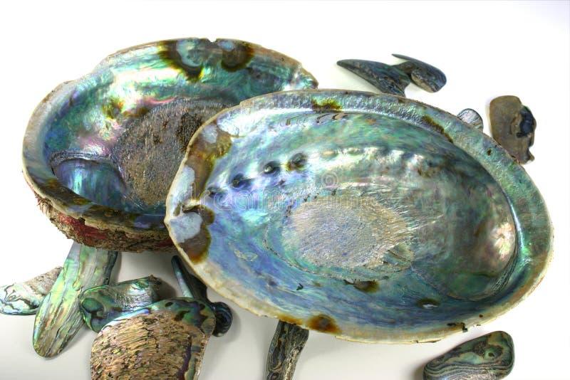 Escudos de Paua fotografia de stock