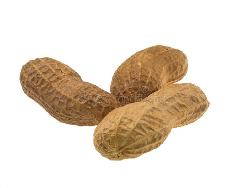 Escudos do amendoim fotos de stock