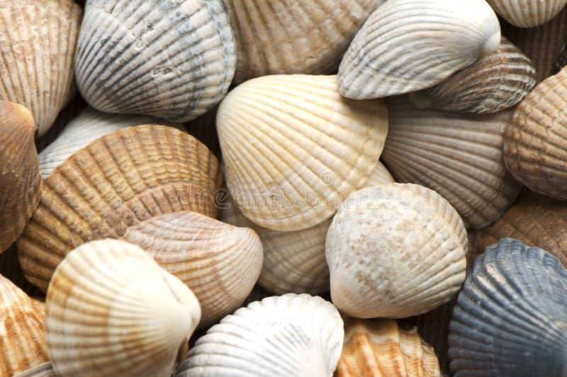 Escudos do mar imagem de stock