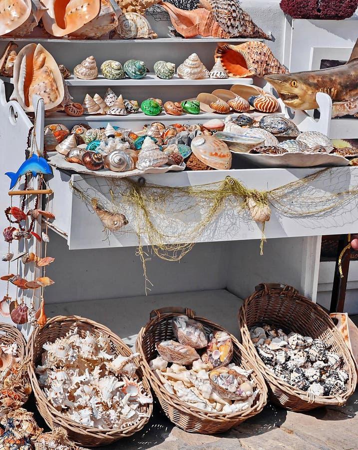 Escudos do mar fotografia de stock
