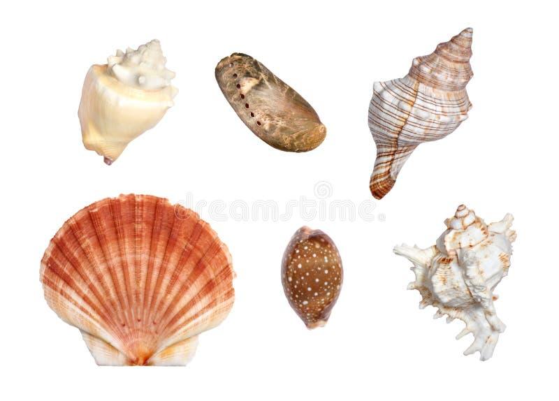 Escudos do mar foto de stock royalty free