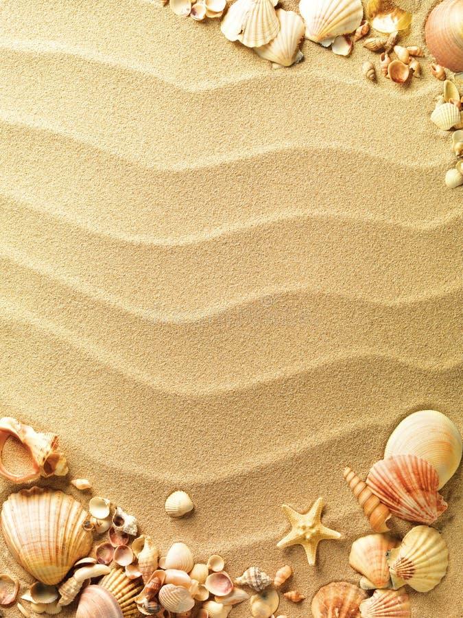 Escudos do mar com areia fotos de stock