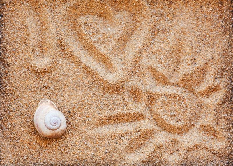 Escudos do mar com a areia como o fundo imagens de stock