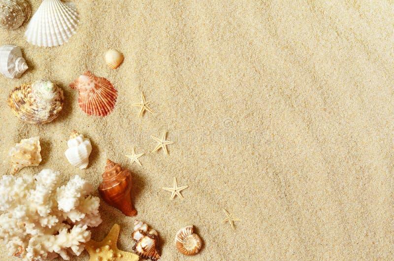 Escudos do mar com a areia como o fundo Praia do verão fotografia de stock
