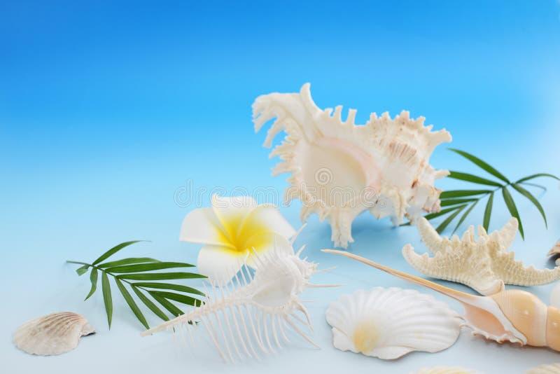 Escudos do mar com flores fotos de stock royalty free