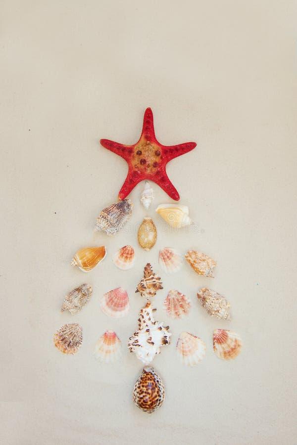 Escudos do mar e peixes vermelhos da estrela no Sandy Beach com espaço da cópia para o texto Conceito do Natal de Noel fotos de stock