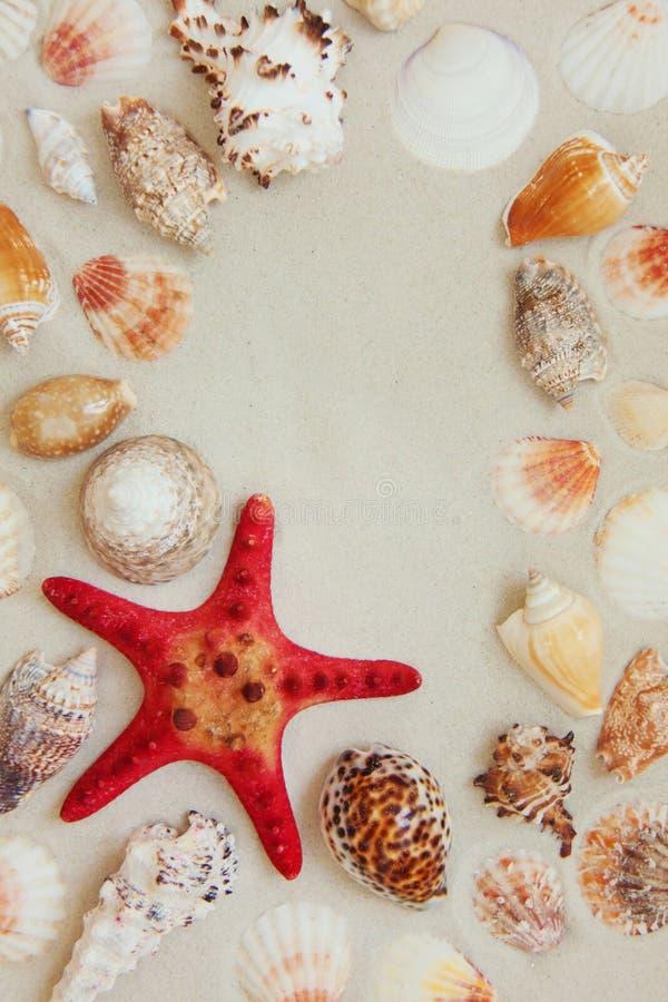 Escudos do mar e peixes vermelhos da estrela no Sandy Beach com espaço da cópia para o texto imagem de stock royalty free