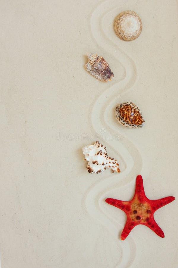 Escudos do mar e peixes vermelhos da estrela no Sandy Beach com espaço da cópia para o texto foto de stock royalty free