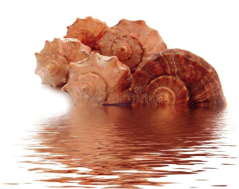 Escudos do Mar Negro fotos de stock